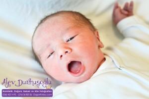 Kuzey Altıntop Doğum Fotoğrafları